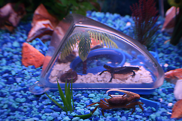 Crabs Habitat By Atlantis Underwater Islands Underwater